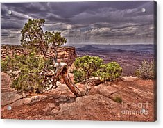 Junipers Storm Acrylic Print by John Kelly