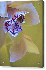 Just Being Here Acrylic Print by Shirley Sirois