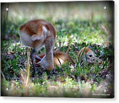 Acrylic Print featuring the painting Just Checking by AnnaJo Vahle