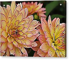 Just Dew Acrylic Print by Dorothy Hilde
