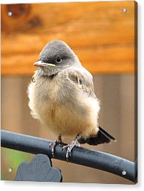 Just Flew The Nest Acrylic Print by Margaret  Slaugh