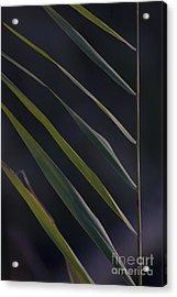 Just Grass Acrylic Print by Heiko Koehrer-Wagner