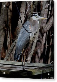 Just Hiding Out Acrylic Print by Larry Krussel