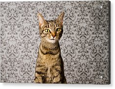 Just Little Weird Acrylic Print by Square Dog Photography