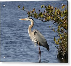 Acrylic Print featuring the photograph Just Need A Little Shade by Jeanne Andrews