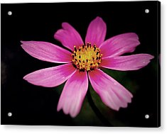Just One Acrylic Print by Steven Milner