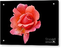 Just Peachy Acrylic Print by Cindy Manero