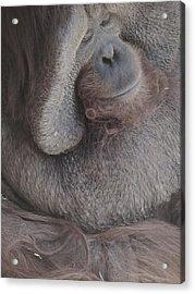 Just Thinking Acrylic Print by Todd Sherlock