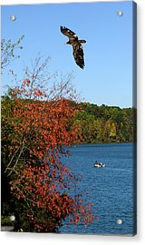 Acrylic Print featuring the photograph Juvenile And Fishermen by Randall Branham