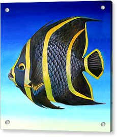 Juvenile French Angelfish Acrylic Print