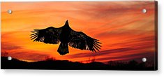 Acrylic Print featuring the photograph Juvenile Sunset  by Randall Branham