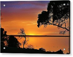 Kangaroo Island - Sunrise Acrylic Print by David Barringhaus