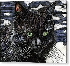 Katie The Cat Acrylic Print by Robert Goudreau