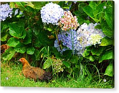 Acrylic Print featuring the photograph Kauai Wildlife by Lynn Bauer