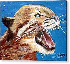 Kentucky Wildcat Acrylic Print by Jeanne Forsythe
