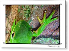 Acrylic Print featuring the photograph Kermit's Kuzin by Debbie Portwood
