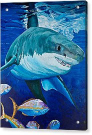 Kids Love Sharks Acrylic Print by Terry Gill