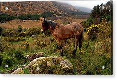 Acrylic Print featuring the photograph Killarney National Park by Barbara Walsh