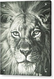 King 2 Acrylic Print by Joanna Gates