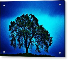 King Oak Acrylic Print by Helen Carson