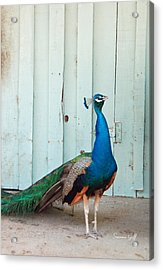 King Of The Barnyard Acrylic Print by Suzanne Gaff