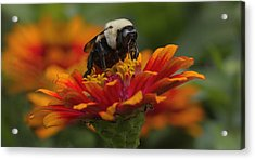 King Of The Flower Acrylic Print