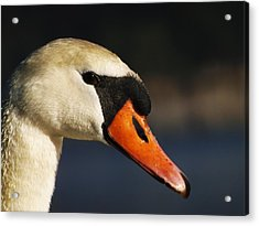 Acrylic Print featuring the photograph King Of The Fowl by Gerald Strine