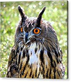 King Owl Acrylic Print