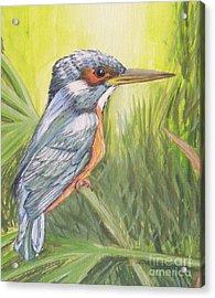 Kingfisher Acrylic Print by Debra Piro