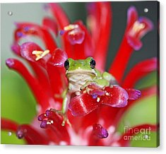 Acrylic Print featuring the photograph Kiss A Prince Frog by Luana K Perez