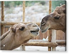 Kiss Me Acrylic Print by Molly Heng