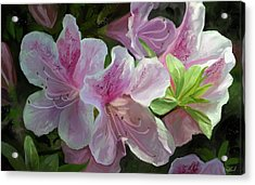 Kissed By Sunlight Acrylic Print by Steve Goad