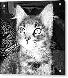 Kitten Acrylic Print by Angela Garrison