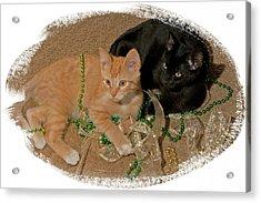 Kitten Brothers Acrylic Print