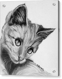 Kitten Cameo Acrylic Print by Susan A Becker