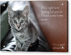 Kitten Greeting Card Acrylic Print by Micah May