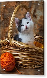 Kitten In Basket With Orange Yarn Acrylic Print by Garry Gay