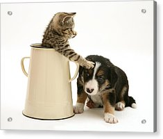 Kitten In Pot With Pup Acrylic Print by Jane Burton