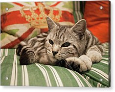 Kitten Lying On Striped Couch Acrylic Print by Kim Haddon Photography