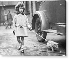 Kitten On Lead Acrylic Print by Fox Photos