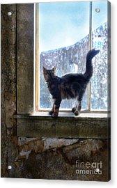 Kitten On Windowsill Of Abandoned House Acrylic Print by Jill Battaglia