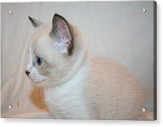 Kitten Profile Acrylic Print by Eduardo Bouzas