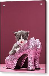 Kitten Sitting In Glitter Shoes Acrylic Print by Martin Poole