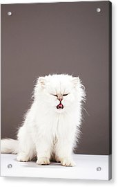 Kitten With Eyes Closed Acrylic Print by Martin Poole