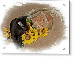 Kittens And Sunflowers Acrylic Print by Judy Deist