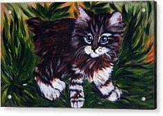 Kitty Acrylic Print by Elena Melnikova