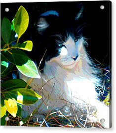 Acrylic Print featuring the painting Kitty Hideaway by Elinor Mavor