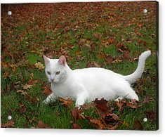 Kitty In The Leaves Acrylic Print by Tyra  OBryant