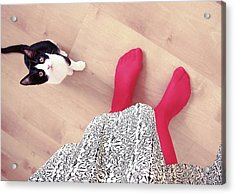 Kitty Looking At Woman Acrylic Print by Gesrules