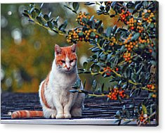 Kitty On The Roof Acrylic Print by Margaret Palmer